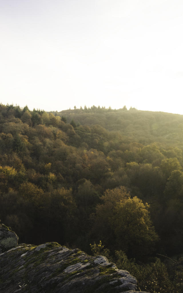 Foret de Brocéliande, automne-hiver