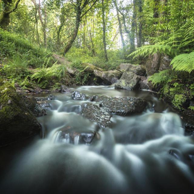 Ruisseau Brocéliande
