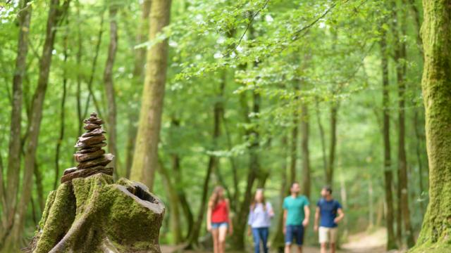 Balade contée en Forêt de Brocéliande