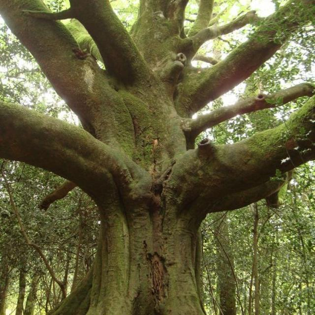 Instagram #broceliande