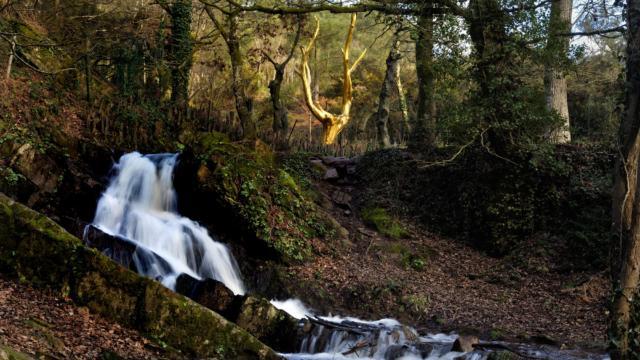 Sculpture de l'arbre d'or au pied du miroir aux fées dans le val sans retour et sa cascade