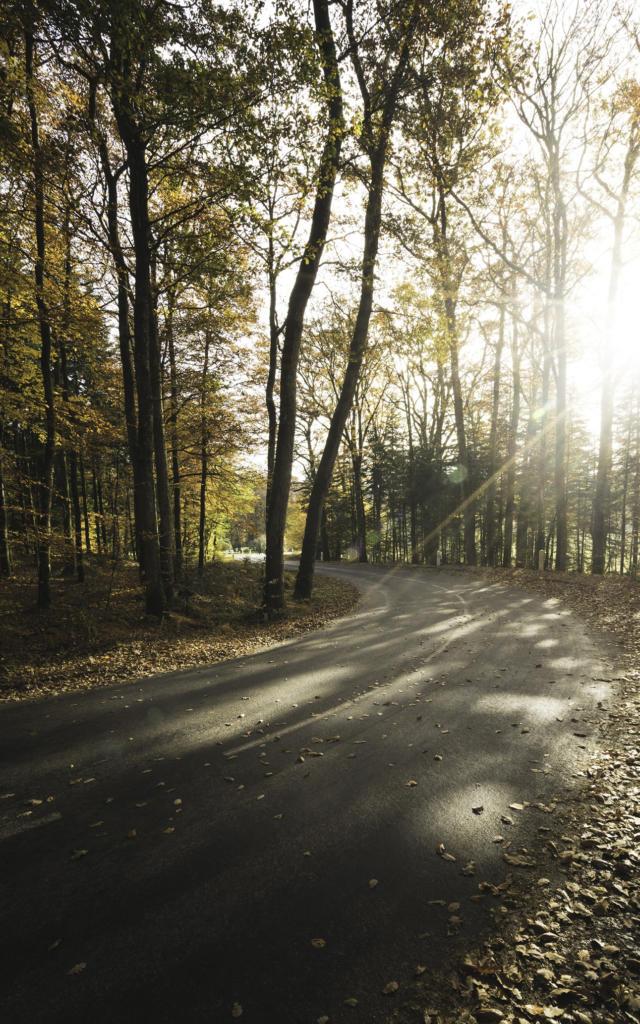 Route de forêt par Monsieur Aventures
