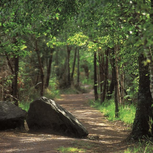 chemin forestier en forêt de Brocéliande
