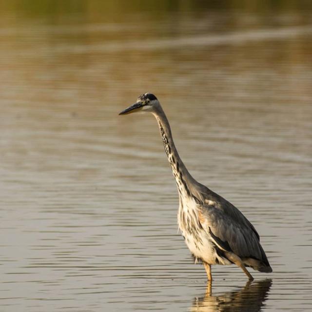 Réserve ornitologique de Careil