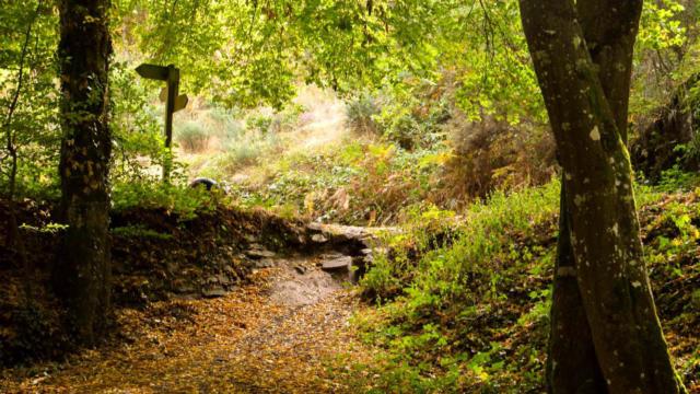 Forêt Brocéliande automne, Val sans retour