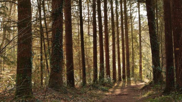 Forêt De Montfort