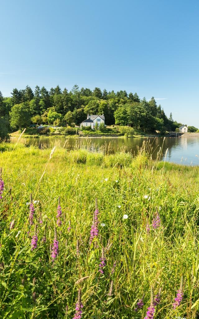 flore abondante sur les rives du lac au Duc à Ploërmel