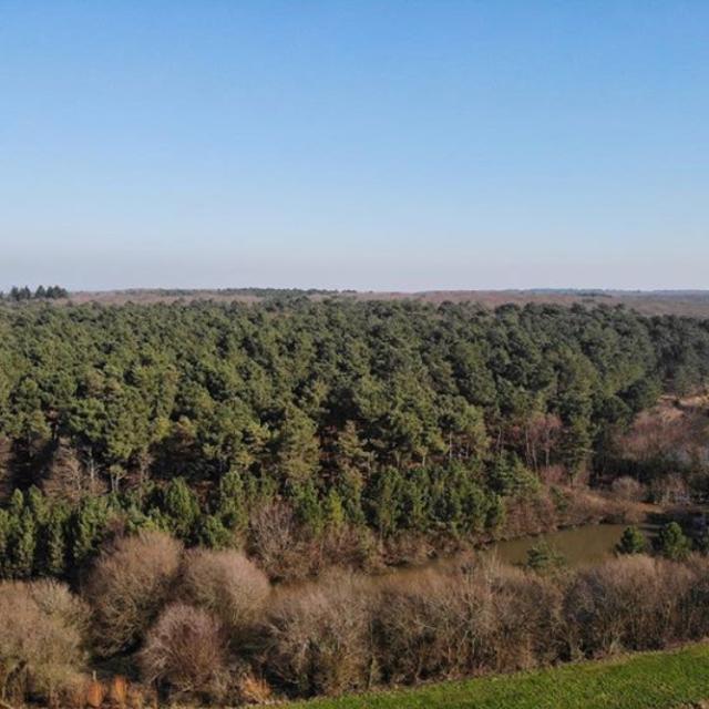 Montfort Sur Meu - forêt