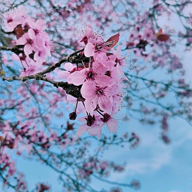 Montfort Sur Meu - printemps