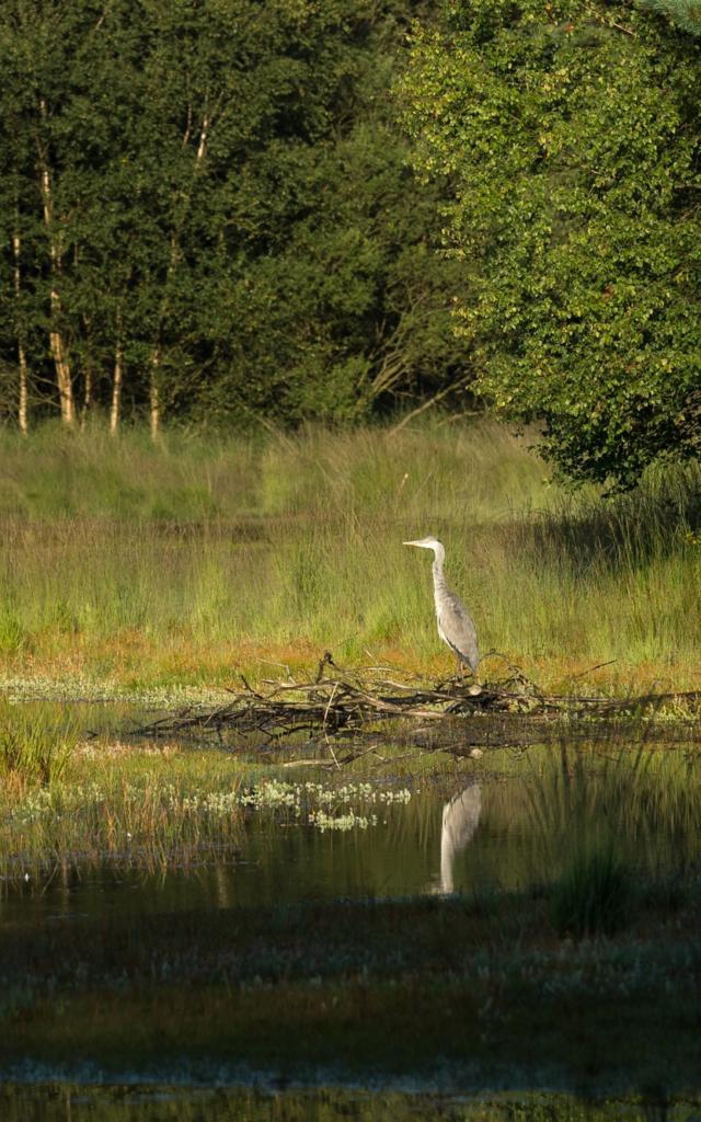 Paimpont, l'étang