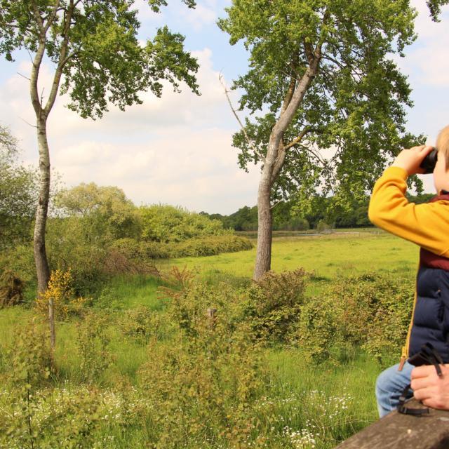 rserve-ornithologique-de-careil-office-de-tourisme-du-pays-de-montfort-9.jpg