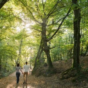 balade dans le val sans retour et découverte de la forêt de Brocéliande