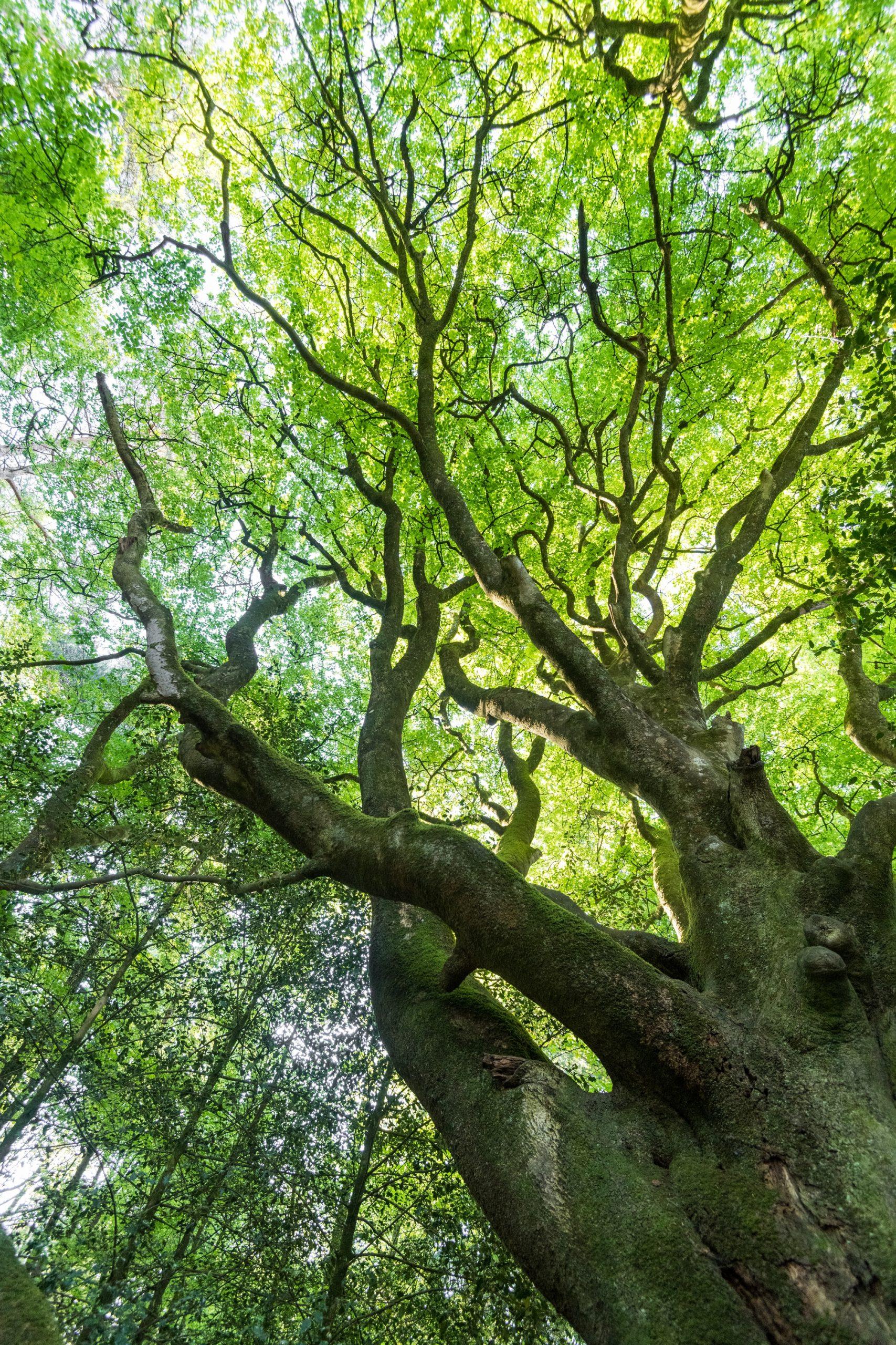 Forêt de Brocéliande en été