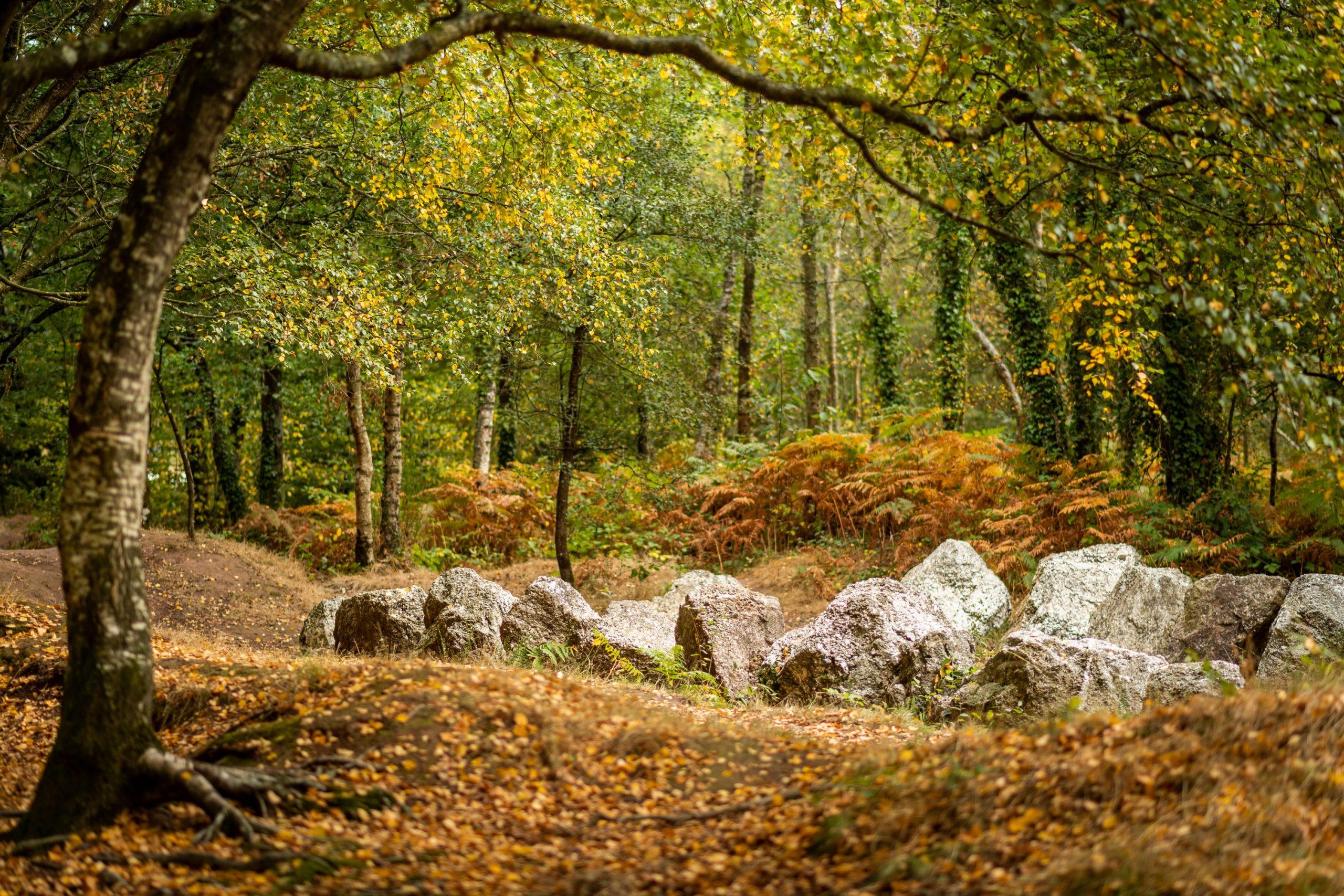 Forêt de Brocéliande en automne