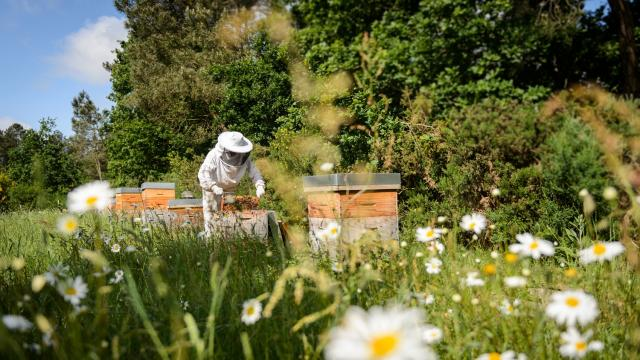 Apiculture Yves Rocher La Gacilly